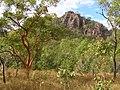 Near Kurrundie Falls - panoramio.jpg