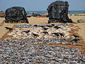 Negombo beach, drying fish (003).JPG