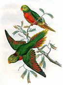 Drawing of two green parrots with orange beaks and red bellies and tail and wing tips