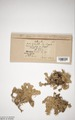 Neuchatel Herbarium Types NEU000113045.tif