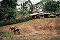 Nicaragua en 1984 - 55.jpg