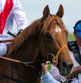 Night of Thunder (horse) Irish-bred Thoroughbred racehorse
