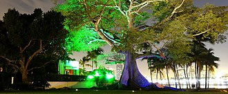 Palm Beach, Florida - Night view of the Big Kapok tree near Flagler Museum