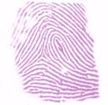 Ninhydrin staining thumbprint.png