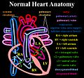 Normal heart.jpg