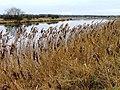 North Bank of the River Tees - geograph.org.uk - 101658.jpg