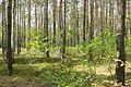 Notecka Forest, Bablin, Nowoloskoniec (3).JPG