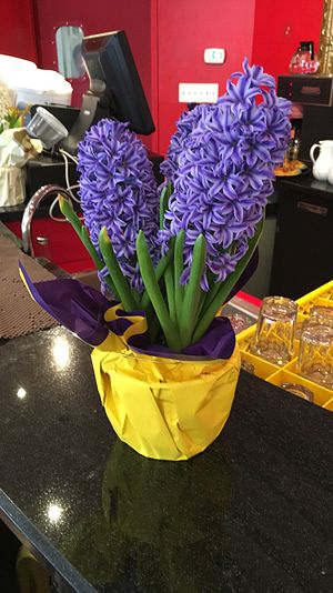 Hyacinth (plant) - Nowruz Sonbol (Hyacinth)