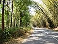 OOty - Mysore road - panoramio.jpg