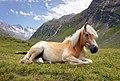 Obergurgl - horse lying.jpg