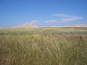 Grassland in the Fall in Nebraska