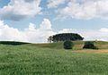 Okolice jez. Hancza, czerwiec 2001.jpg