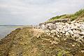 Old wooden sea defence at Ella Nore - geograph.org.uk - 1368084.jpg