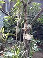 Orto botanico di Napoli 31.jpg