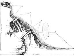 dinosaurus botten Carbon dating zwarte Gay HIV positieve dating