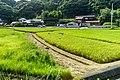 Paddy field in Wakayama City, Wakayama Prefecture; August 2016 (03).jpg