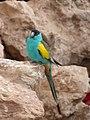 Paignton , Paignton Zoo, Desert Zone Bird - geograph.org.uk - 1485152.jpg