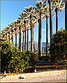 Palms, Mentone, CA 2-3-13a (8510136239).jpg