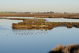 Palo Alto Baylands February 2013 012.jpg