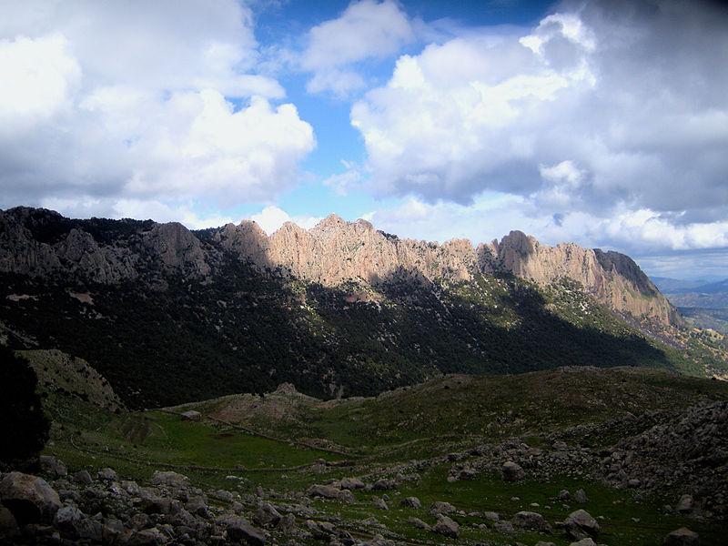 File:Parc National de Theniet El Had ( Tissemsilt ).jpg