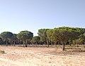 Parque de Doñana 20210610 68.jpg