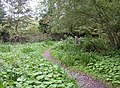 Path to the old mill, Caldey Island - geograph.org.uk - 590671.jpg
