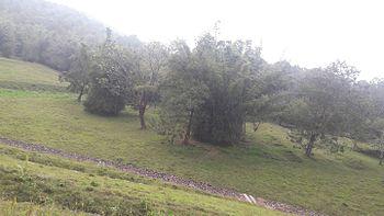 Perambikulam tiger reserve.jpg