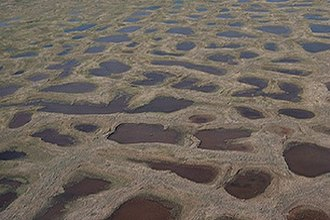 Raised bog - A polygonal bog comprising flat ponds with the characteristic polygonal structure