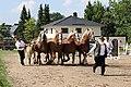 Pferdesportveranstaltung in Seifersdorf (Jahnsdorf)..2H1A8639WI.jpg