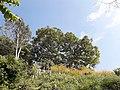 Phulari Gumba garden.jpg
