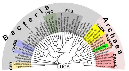 Prokaryote wikipedia phylogenetic tree showing the diversity of prokaryote ccuart Image collections