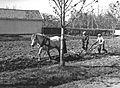Pløying med hest på Vallø Oljeraffineri - Pløying med hest.jpg