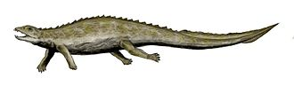 Placodus - Restoration