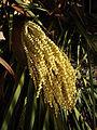 Plant 04192-nevit.jpg