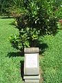 Plaque Kofi Annan - Jardin de Pamplemousses.JPG