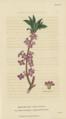 Plate 8 Daphne Mezereum - Conversations on Botany-1st edition.tiff