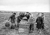 Pn-glebovskoe-1978-helpers.jpg
