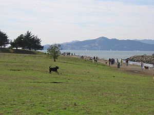 Point Isabel Regional Shoreline - The park on a November day with Angel Island and Marin County in the background.