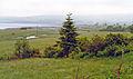 Portnacroish geograph-3931208-by-Ben-Brooksbank.jpg