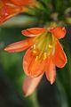 Pretoria Botanical Gardens-034.jpg