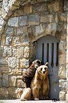 Prison break .. (22057430014).jpg