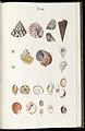 Prodromus in systema historicum testaceorum Tafel 08.jpg