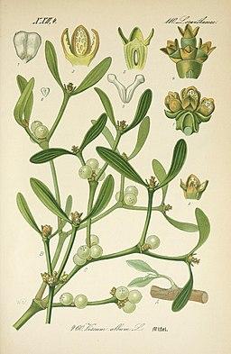 Prof. Dr. Thomé's Flora von Deutschland, Österreich und der Schweiz, in Wort und Bild, für Schule und Haus; mit ... Tafeln ... von Walter Müller (Pl. 460) (7982435201)
