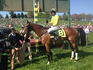 Maryland Hunt Cup - Win Picture of 2013 Maryland Hunt Cup winner Professor Maxwell, Mark Beecher aboard.