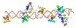 Protein PAX2 PDB 1k78.png