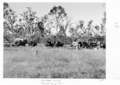 Queensland State Archives 4449 Wandoan Lands tank sinking plant 1952.png