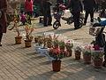 Qufu - Xiguan - potted plant vendors - P1060023.JPG