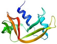 RNase A.png