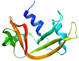 Ribonuclease - Structure of RNase A