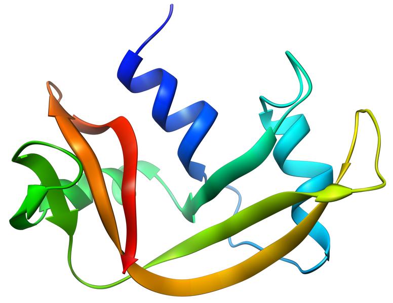 Ribonukleas A